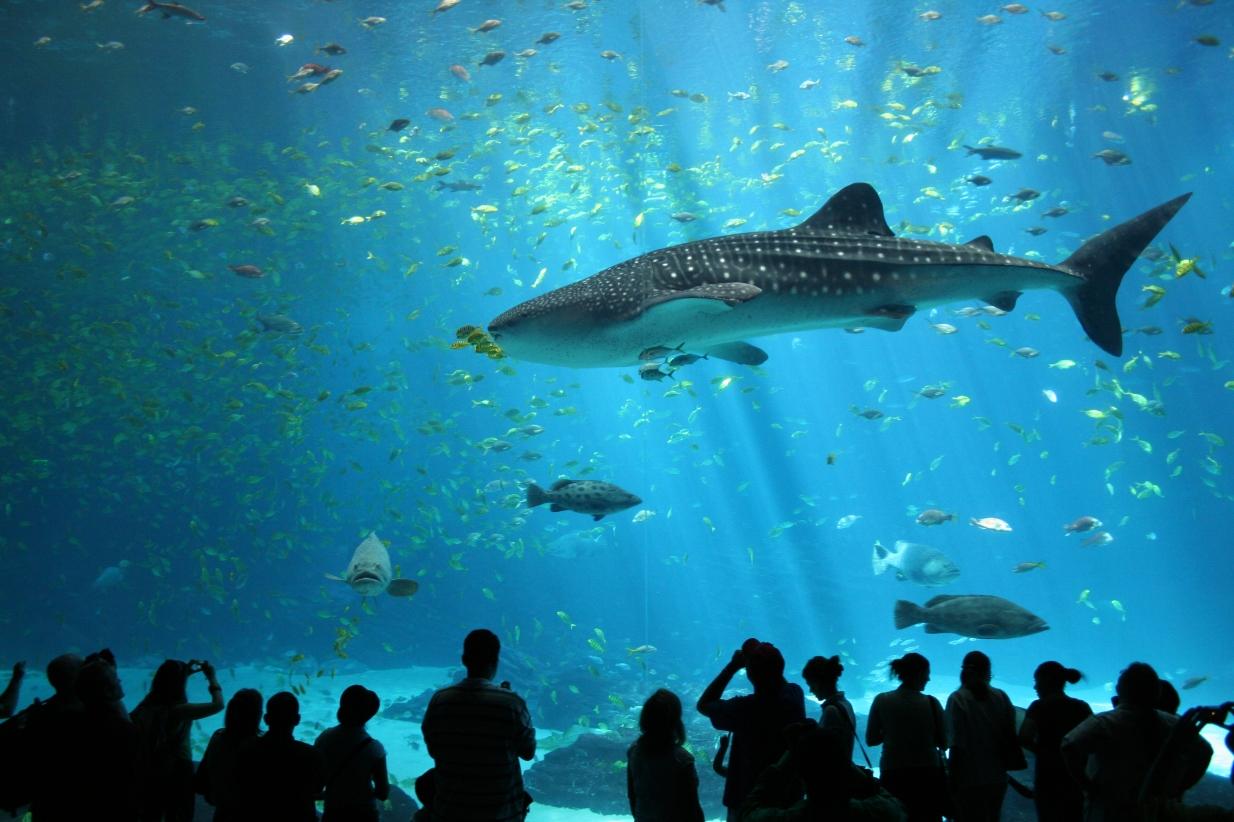 Georgia-Aquarium.jpg